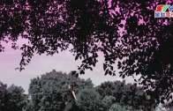 (粵)12/09/2016卡拉O Fillmore