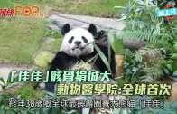 (港聞)「佳佳」骸骨捐城大 動物醫學院:全球首次