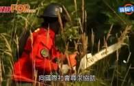 (粵)智利山火燒過一周11死  火場面積如兩個香港