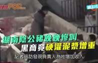 (粵)湖南陰公豬晚晚慘叫  黑商竟硬灌泥漿增重