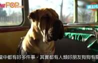 (粵)世界首架狗狗觀光巴  遊覽英倫景色名勝
