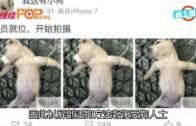 (粵)內地網民極變態 竟直播解剖活小狗