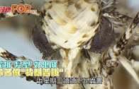 (粵)飛蛾˝髮型˝好鬼似 命名做˝特朗普蛾˝
