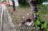 大馬40少年踩夜車  8人遭撞死司機被捕