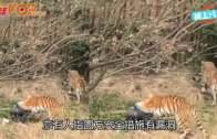(粵)台北道友亂闖獅圈  動物園水柱攻擊解圍