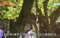 (粵)李英愛效應不再  新劇收視急跌要救亡
