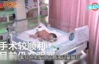 (粵)廿歲父以為腹裂醫唔好  初生女嬰慘遭遺棄
