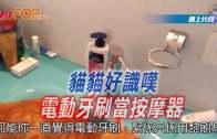 (粵)貓貓好識嘆  電動牙刷當按摩器