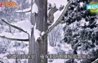 57獼猴因混種被殺  日本動物園:有悼念儀式