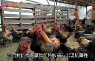 廣東染H7N9搶救27日 首名台籍人士死亡