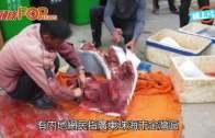 (粵)廣東漁民活劏海豚出售  灰白色唔吉利:死咗先捉