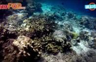 (港聞)中年港男大馬潛水溺斃  55米海底尋回遺體