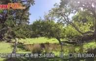 (粵)草本精華遊  Great Barrier Island