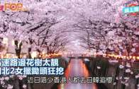 (粵)高速路邊花樹太靚 湖北2女擸鋤頭狂挖