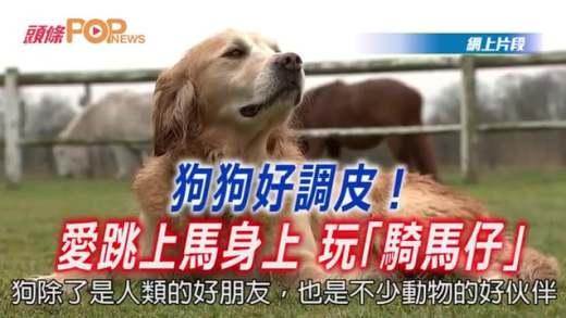 """(粵)狗狗好調皮!愛跳上馬身上玩""""騎馬仔"""""""