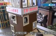 (粵)三藩市貓咪咖啡店 成1500流浪貓寄養家園