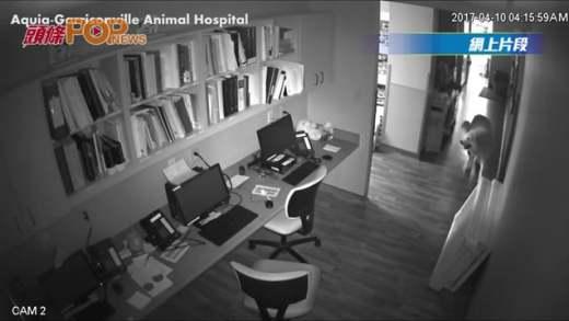 (粵)大白熊自己開「4道門」逃出醫院