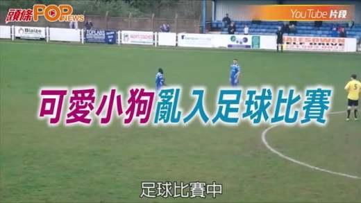 (粵)可愛小狗亂入足球比賽