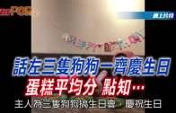 (粵)話左三只狗狗一齊慶生日 蛋糕平均分 點知….