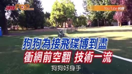 (粵)狗狗為接飛碟搏到盡 衝網前空翻 技術一流
