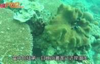 (粵)馬來西亞樂浪島  蔚藍海底潛行