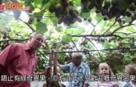 (粵)紐西蘭Tauranga  走入奇翠國度