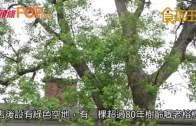 (粵)亞尼克夢想村  舊美軍宿舍歎野餐