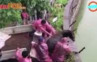(粵)江蘇動物園送驢入虎口 極殘忍˝股東一時意氣˝