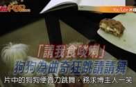 (粵)「請我食啖喇」狗狗為曲奇狂跳請請舞