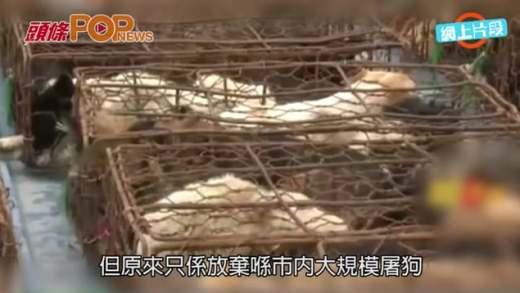 義工廣州攔車救千貓狗 幾隻˝共享˝一雞籠送死