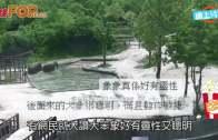 (粵)南韓象BB跌落池 兩大象跑落水合力救