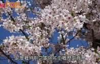 熱氣球升空直擊 俯瞰朝鮮古皇陵