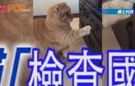 貓貓「檢查國庫」發現得個「吉」 發怒