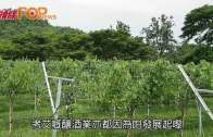 樂在葡萄成熟時  泰國考艾