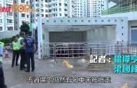杏花邨封停車場入口  工人加緊清理禁止內進