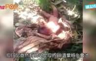 印尼初生B遭棄化糞池  村民聽到喊聲救一命