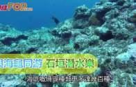 與海龜同游  石垣潛水樂