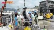 尋找沖繩藍鰭吞拿魚的故事