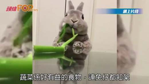 唔好揀飲擇食 乖兔食菜超爽