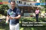 神奇蜘蛛捕捉器 不用打死 活捉放回