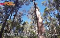 西澳激玩  森林高空繩索陣