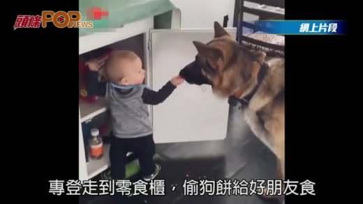 BB幫狗狗偷零食 他倆感情十分好