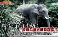 遊客不顧勸阻激怒大象  導遊為救人被象踩踏亡