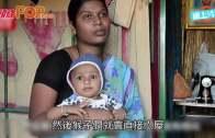 印度兩歲男童天賦異稟  同長尾葉猴溝通順暢