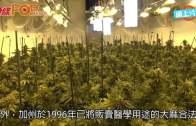 加州消遣用大麻合法化  民眾徹夜排隊搶購