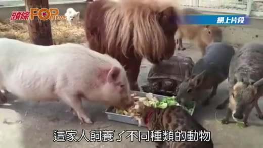 超有愛!一個動物共融的畫面
