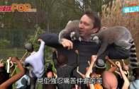 英記者出鏡對戰狐猴  一打八被咬親好痛苦