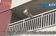 驚險!狗狗抓欄杆不支墮下 鄰居被單營救
