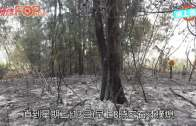 南生圍最新高空照  火劫後變「黑色森林」