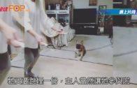 主人跳繩減肥 狗仔亂入 來個360度轉圈
